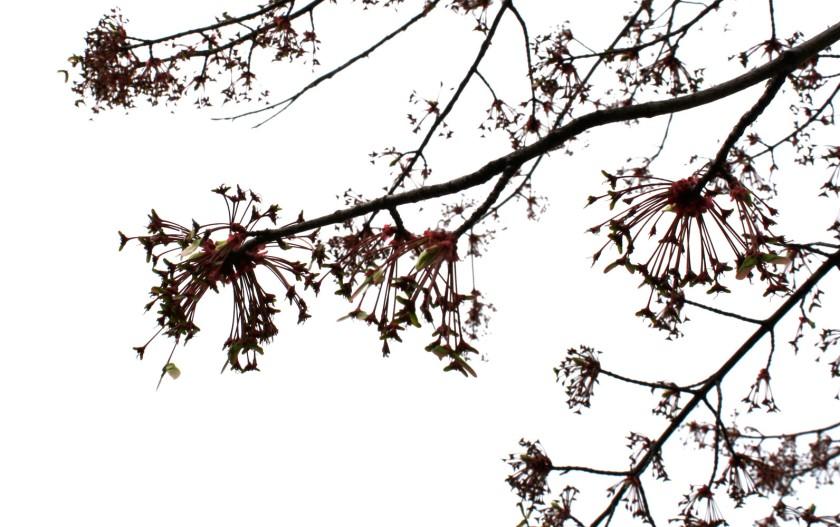 aprilblog108