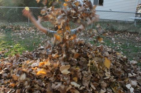 Leaf pile.  November 2013.