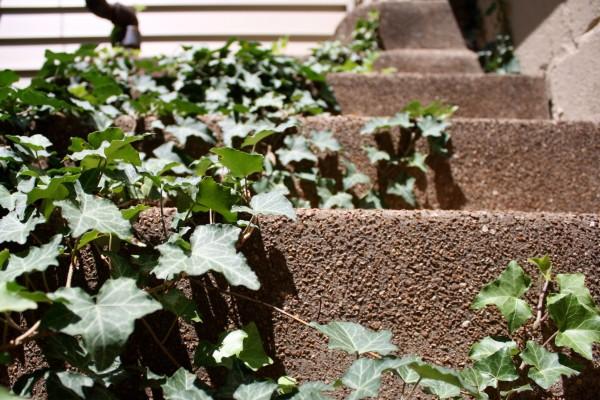 Through the Lens Thursday.  Stairs.